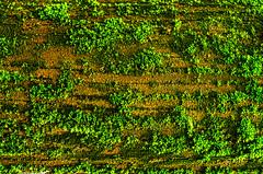 Wooden Texture (Rajborbhatkar) Tags: nature natural beauty beautiful background backgrounds green greenery grass wood wooden texture rainy rain tree day sharp season street wild wildlife forest