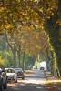 de Beukenlaan (Sebastian.Stevens) Tags: oosterbeek beukenlaan autumn herfst zon sun laan bomen trees