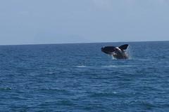 Walker Bay Nature Reserve (DrumBox) Tags: wal hermanus südafrika