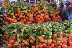 DSC_8295 London Columbia Road Sunday Flower Market Orange Chinese Lanterns Physalis alkekeng (photographer695) Tags: london columbia road flower market sunday orange chinese lanterns physalis alkekeng