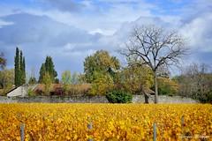 Ripaille aux couleurs d'automne (joménager) Tags: château chablais nikonpassion nikonafs24120f4 paysage hautesavoie thononlesbains nikond3 france fr