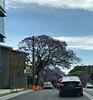 2017 Newtown #4 (dominotic) Tags: 2017 traffic street sign carillonavenewtown cars bluesky innersydney newtown jacarandatree purple iphone8 sydney australia