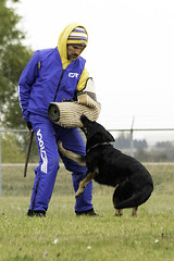 TB0A4973 (templeinmn) Tags: 2017 fall ipo mvsv schutzhund trial