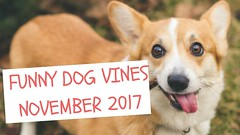Funny Dog Vines Compilation November 2017 - JustFunStuff.Me (abhigyandms) Tags: funnyanimalvideos funnyanimalvines funnyanimals funnycats funnydogs