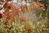 Sorbus (jaanaMariaK) Tags: sorbus canon 5dmark2 cosinon 50mm autumn sorbusdodong