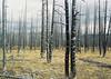 (Catherine Lemblé) Tags: nps yellowstone national park wyoming film analog kodakportra mamiya645 burn trees roadtrip west