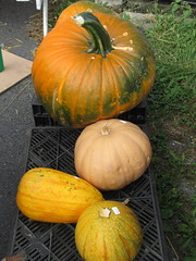 Squash And Pumpkin. (dccradio) Tags: smithsburg md maryland ivyhillfarm farmstore orchardstore ag agricultural agriculture produce harvest autumn fall pumpkins pumpkin squash canon powershot a3400is