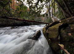 Nope (csnyder103) Tags: petey dog pittie rescue water bradleycreek pisgah fall autumn canoneos6d canonef1124