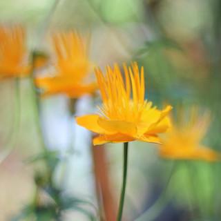 Autumn mood, summer flower / Ljetni cvijet u jesenjem rasplozenju