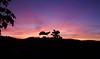 Crépuscule (Grand-Pappà...) Tags: crépuscule lobeç auvergne margeride marjarida massifcentral hauteloire hautesterres