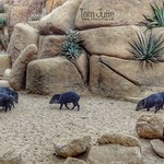 The Mexican-American rock desert, Arnhem, Netherlands - 4569 thumbnail