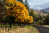 selway river-10-08-17-9 (Ken Folwell) Tags: fall gold trees outdoor landscape leafs idaho canon5dmkiii grass tree road sky forest