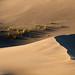 Animal Track On Sand Dune