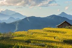 _29A0373.0917.Sa Pả.Sapa.Lào Cai. (hoanglongphoto) Tags: asia asian vietnam northvietnam northwestvietnam landscape scenery vietnamlandscape vietnamscenery vietnamscene sapalandscape sunlight sunny afternoon sunnyafternoon mountain sierra mountainouslandscape highland fields ricefields sky canon canoneos5dsr canonef70200mmf28lisiiusmlens tâybắc làocai sapa sapả phongcảnh phongcảnhsapa buổichiều nắng nắngchiều núi dãynúi ruộnglúa harvest lúachín mùagặt sapamùalúachín sapamùagặt bầutrời house ngôinhà