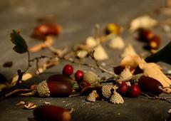 Falling seeds ... Spreading my LOVE - said nature- (Raquel Borrrero) Tags: seeds semillas nature naturaleza autum otoño bellota baya hojas secas leaves wood bosque alimento naturephotography macrofotografía