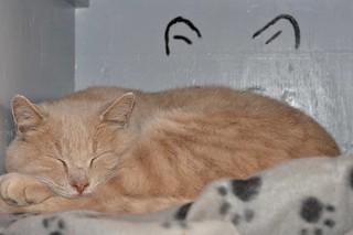 Garfield loves his new loft!