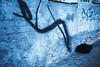 #17 Introvert (-Visavis-) Tags: urbananimal cat blue fujix100 finepixx100 graffiti introvert wall brickwall kyiv streetphoto blackcat