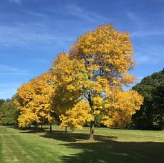 Canons Park, London (lederon) Tags: canonspark autumn london