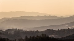 THANK ALL FOR 1M VIEWS!!! (Oliverpan) Tags: peace foggy fog 7dii canon 75250mm dusty forest mountains landscape flickr