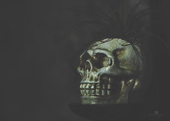 the golden years (rockinmonique) Tags: shocktober skull gold golden spooky plantforhair muttart halloween moniquew canon canont6s tamron copyright2017moniquew