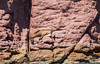 Snorkeling with Sea Lions & Whale Sharks, exploring Isla Espíritu Santo (jennchanphotography) Tags: whale shark snorkel sea lions isla espiritu santo protected unesco heritage jennchanphotography lapaz mexico travel tourism explore nature presstrip media cangeo
