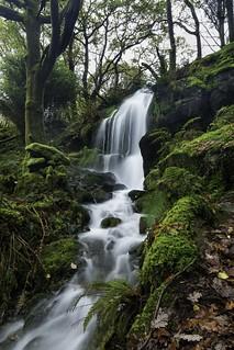 Craflwyn Forest