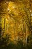Alistair John Borland (AlistairJBorland) Tags: ethereal trees