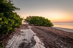 Beach road sunset (MJ6606) Tags: road sand trees coastline sky outdoor gulfofmexico tampabay bay bridge florida landscape nature ocean sunset sunshineskyway
