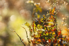 Autumn Rhapsody (Canon EOS SL2 Review) (Thousand Word Images by Dustin Abbott) Tags: bokeh canoneossl2 canoneos200d beautiful adobelightroomcc review autumn dustinabbottnet thousandwordimages canada blackbay alienskinexposurex2 2017 photography apsc petawawa pembroke hiking camera ontario adobephotoshopcc comparison cropsensor tamronsp85mmf18divcusd photodujour dustinabbott ca fern explore explored