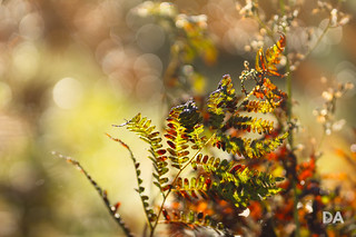 Autumn Rhapsody (Canon EOS SL2 Review)