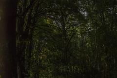 Enchanted demense (De Lambo) Tags: flowersplants backlittrees enchanted forest trees