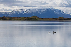 Love is in the Air (dshoning) Tags: swans iceland water mountains june