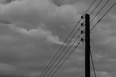 20171008-DSC01492 (Fabian Tomczyk) Tags: blackandwhite pole wires lines power electricity gray sky wood woodenpole edited lightroom sony sonyalpha6000 alpha6000 alphacollective alphaddicted minolta rokkor manualfocus