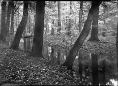 081017-2 (salparadise666) Tags: voigtlander bergheil 9x12 heliar 135mm fomapan 10064 caffenol rs 14min nils volkmer vintage folding view large format camera film sheetfilm analogue nature landscape longtime exposure hannover region niedersachsen germany homemade negativ bw black white monochrome
