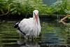 Waschtag (jogi311) Tags: naturpark tiere storch dormagen nordrheinwestfalen deutschland de