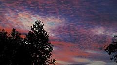 A dusk shot (tobystacey) Tags: landscapeshot landscape nature naturephotography dusk sunset sony 63xzoom horizon trees tree sky orange silhouette colour colours autumn colourful twilight photography clouds cloud weather weatherwatches distance purple black