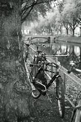 bike@Kö, Düsseldorf 4 (Amselchen) Tags: bicycle trees canal water season autumn fall mono monochrome bokeh blur dof depthoffield bnw blackandwhite fujifilm fujifilmxseries fujinon xt2 fujifilmxt2 xf35mmf14r reflection