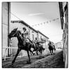 Palio di Faella (Luca Cesari) Tags: palio faella paliodifaella cavallo horse run corsa m10 leica leicam10 wate 16mm bw biancoenero perdono festadelperdono