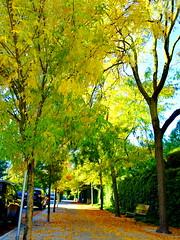 HBM! (peggyhr) Tags: peggyhr autumn leaves bench hbm vancouver bc canada reflections light shadows textures sidewalk level1pfr super~sixbronze☆stage1☆ frameit~level01~ carolinasfarmfriends thelooklevel1red