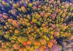 Technicolor (Matt Champlin) Tags: friday tgif life flying flight drone drones dji fall autumn fallfoliage foliage colorful trees forest beautiful evening nature landscape flx fingerlakes cny aerial aerialphotography dronephotography