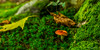 mushrooms (aingerubidaurreta) Tags: forest autumn mountain mendi moss grass green landscape leaves nikon nikonistas nature naturalpark
