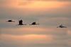 Kraniche (waltsphoto) Tags: kraniche vogelzug zugvögel himmel wolkenlandschaft herbst sonnenuntergang