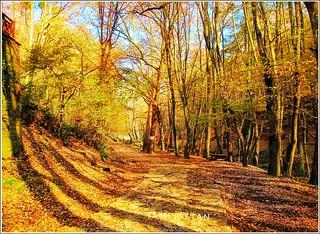 Shadows of autumn.