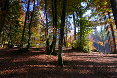 A sunny autumn (annalisabianchetti) Tags: wood bosco trees alberi autumn autunno alps italy montecampione mountains montagne vallecamonica light nature natura