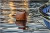 Liguria , harbor scene ... (miriam ulivi) Tags: miriamulivi nikond7200 italia liguria sestrilevante porto harbour mare sea gavitello buoy reflections sunset tramonto riflessi
