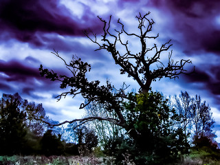Tree Cloud - Sky Sky Bird Nature Outdoors No People Animals In The Wild Beauty In Nature Animal Wildlife Day Animal Themes Branch Landscape Sunset Vulture Close-up