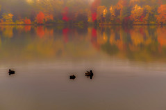Three Ducks on Walden Pond (briburt) Tags: briburt massachusetts nikon d90 fall birds composition thoreau pond lake waldenpond autumn colors ducks wildlife peaceful zen mist misty fog blur water concord nature wildlfe dramatic vibrant painterly painting impressionistic waterfowl dream dreamy dreamlike fallcolors newengland concordmassachusetts mystical
