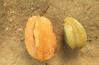 Averrhoa carambola. ''Carambol'' Governors breakfast fruit. Government House garden. Averrhoa bilimbi, makes good jam. Seychelles. Mahe (Mary Gillham Archive Project) Tags: 6586 averrhoabilimbi averrhoacarambola governmenthousegarden mahe planttree seychelles