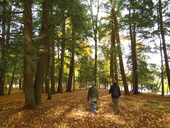 IMG_5008 Strolling along the Escanaba River (jgagnon63@yahoo.com) Tags: forest forestbathing autumn fall october deltacountymi upperpeninsula uppermichigan michigan hemlocks wood escanaba
