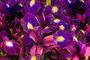 Iris Plethora (Jerry Fornarotto) Tags: arrangement beautiful beauty bloom blooming blossom blossoming botanical botany bouquet closeup color colorful cr2017 detail flora floral florist flower gardening green iris jerryfornarotto macro nature northwest petal pikeplacemarket plant purple seattle spring stem stems vibrant violet washington washingtonstate west yellow